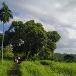 Bukit Cinta Campuhan Ubud