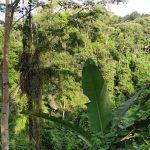 Pemandangan Bukit Cinta Campuhan Ubud