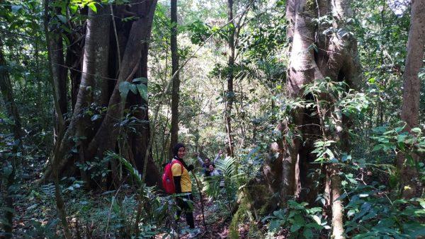 Hutan Tamblingan