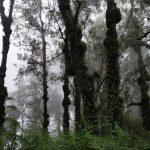 Gunung Penggilingan Bali